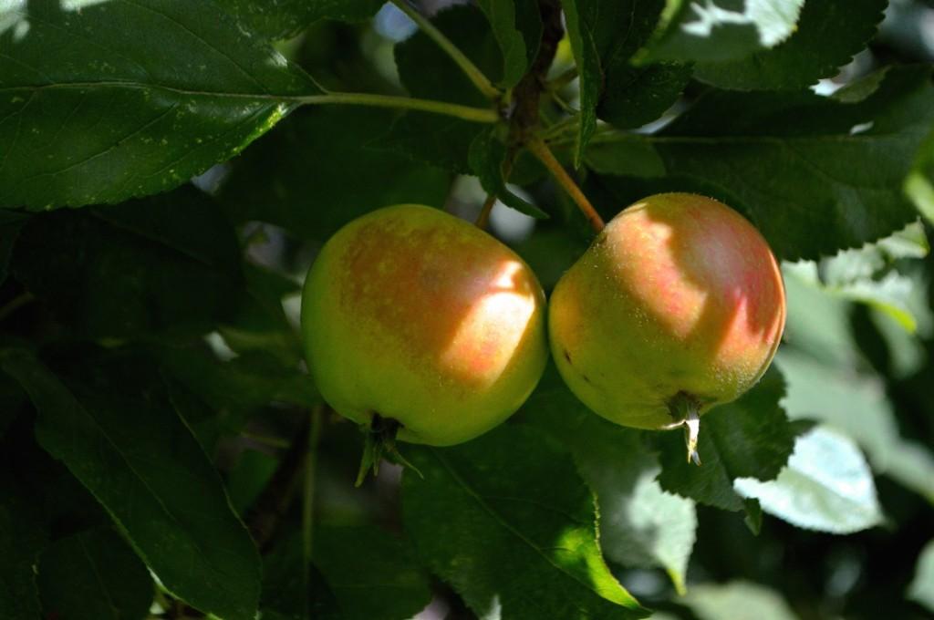 umodne æbler