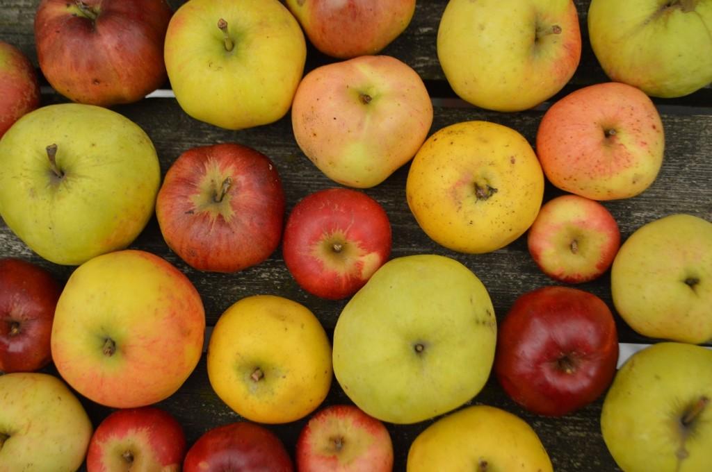 i sæson nu æbler 001